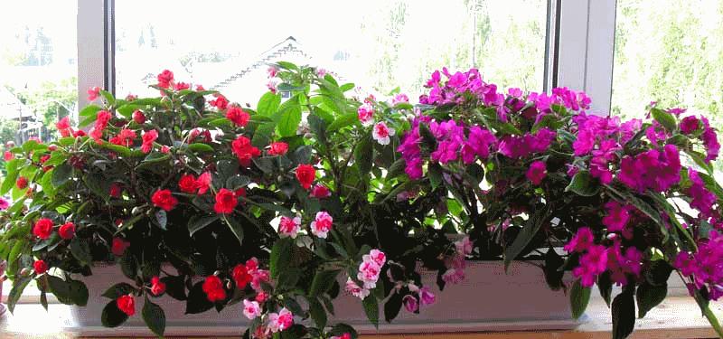 Комнатный цветок на балконе