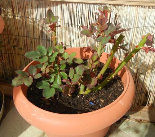 Оставляем только здоровые листья и стебли