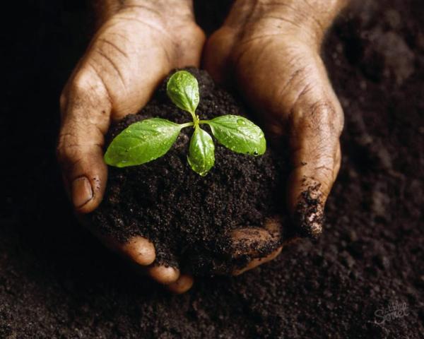 Удобрение для комнатных растений