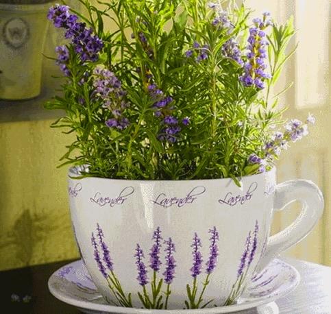 Фото однолетнего растения в горшке