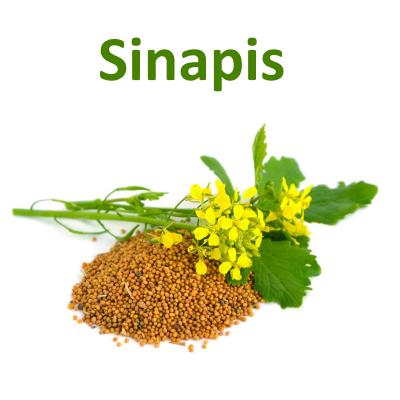 Sinapis