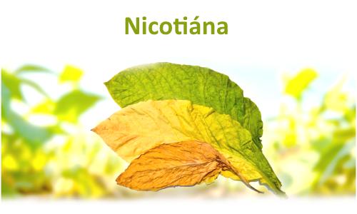 Nicotiána
