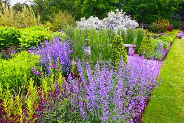 Цветок в саду