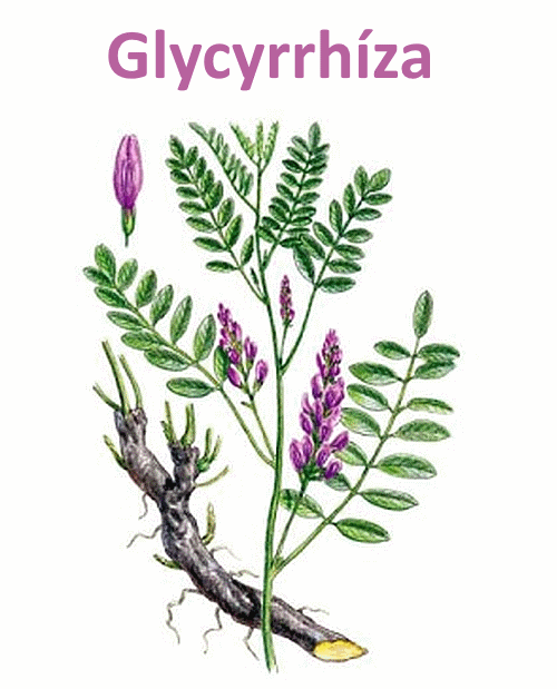 Glycyrrhíza