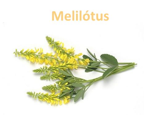 Melilótus