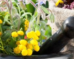 Лекарственные растения (фото и описание)