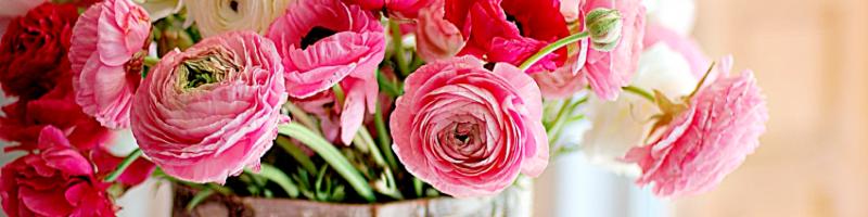 Ранункулюс (фото цветов)