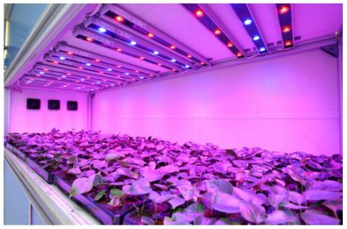 Светодиодная подсветка для цветов