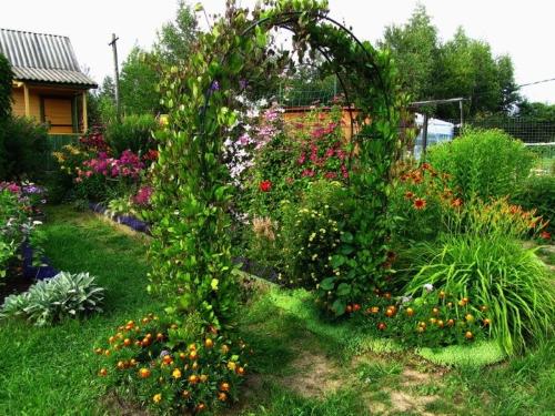 Кобея в саду