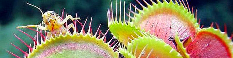Растения хищники фото