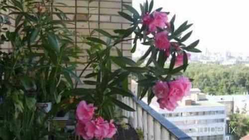 Цветок на балконе