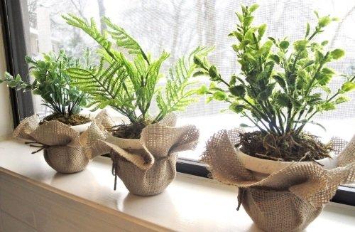 Выбор места для растения
