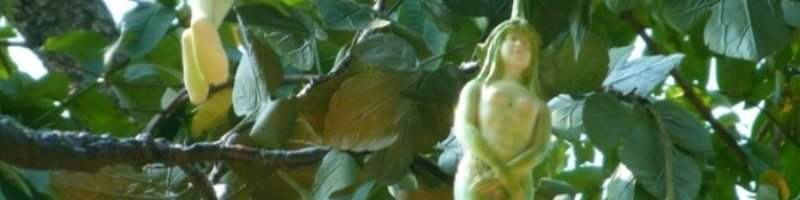 Narilatha (фото цветов)