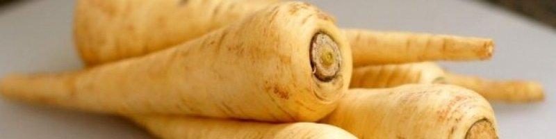 Пастернак (фото растения)