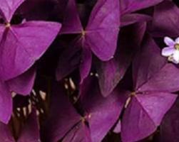 Бабочка (фото цветов)