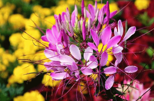 Изысканная экзотика для сада